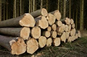 wood-491696_1920